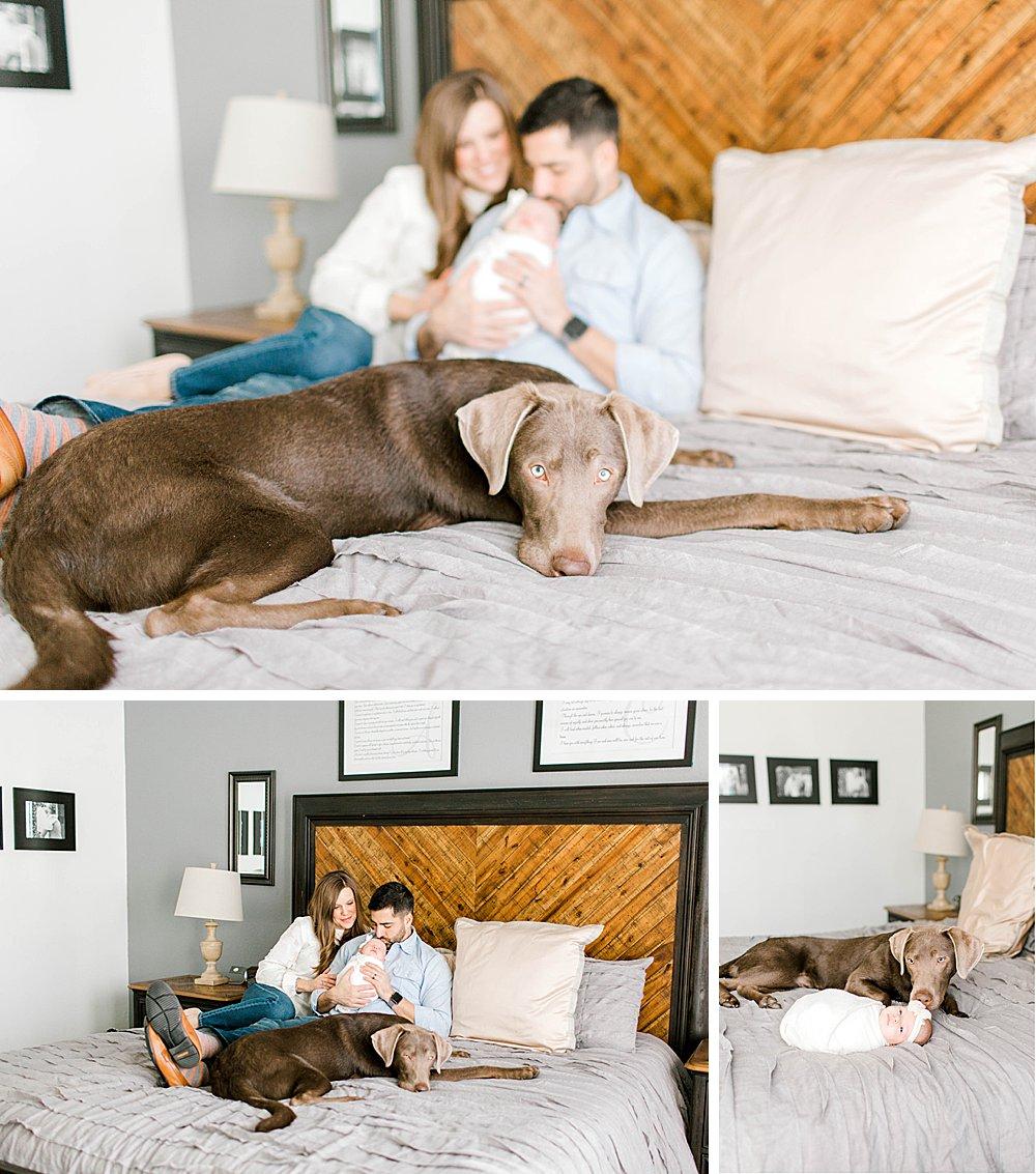 Lifestyle newborn session I Baby girl with dog